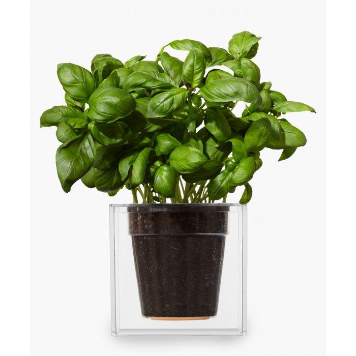 Image for Clear cube planter 12.2cm x 12.1cm x 12.2cm