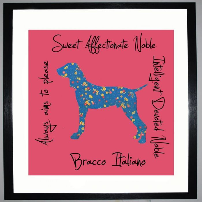 Image for Bracco Italiano - Dog Trait