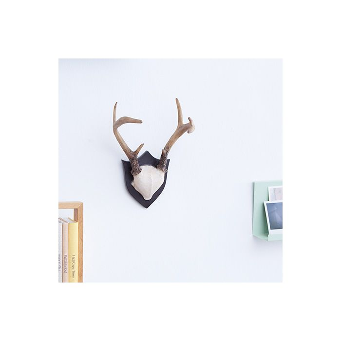 Image for Contemporary Taxidermy Deer Antlers Wall Hanger Wall Art Decorations Home Idea