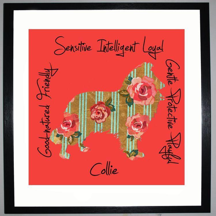 Collie - Dog Trait