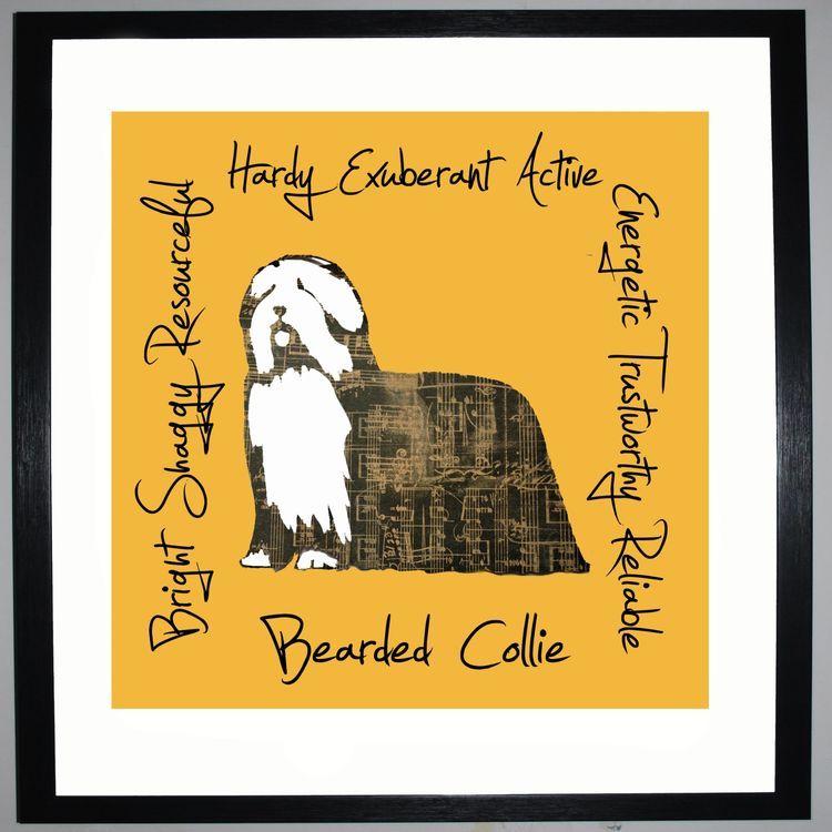 Bearded Collie - Dog Trait