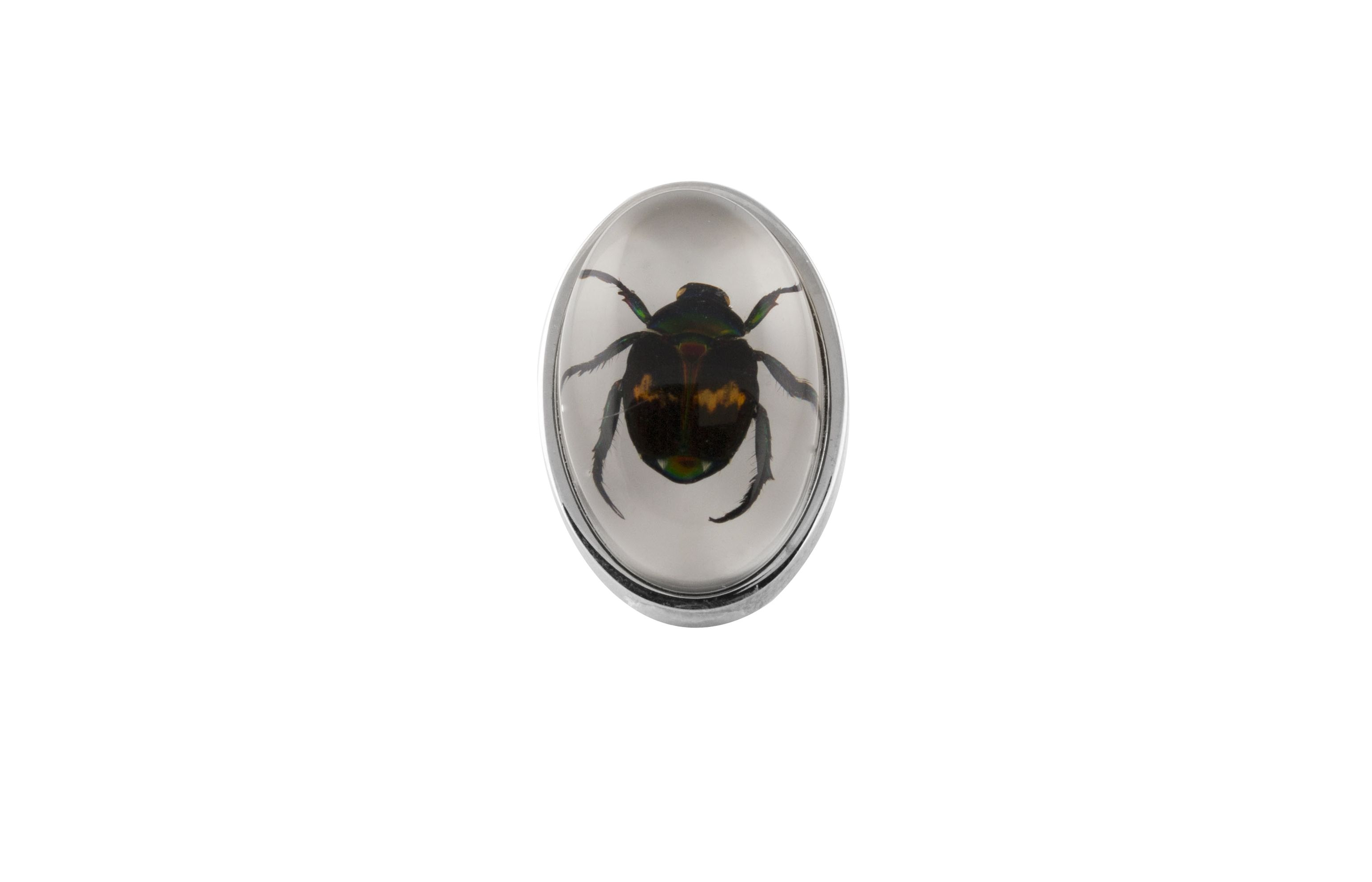 Rhodium  Resin  Clear  Oval  Lucky Chafer Beatle  Deadly Creatures Pin