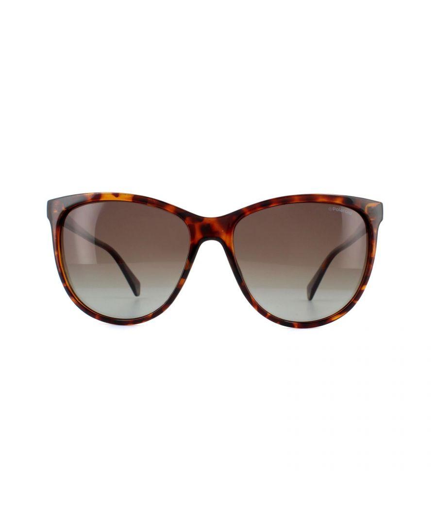 Image for Polaroid Sunglasses PLD 4066/S 086 LA Dark Havana Brown Polarized