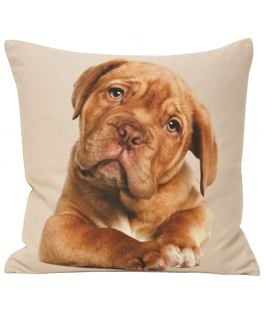 Image for Animal Labrador 45X45 Poly Cushion