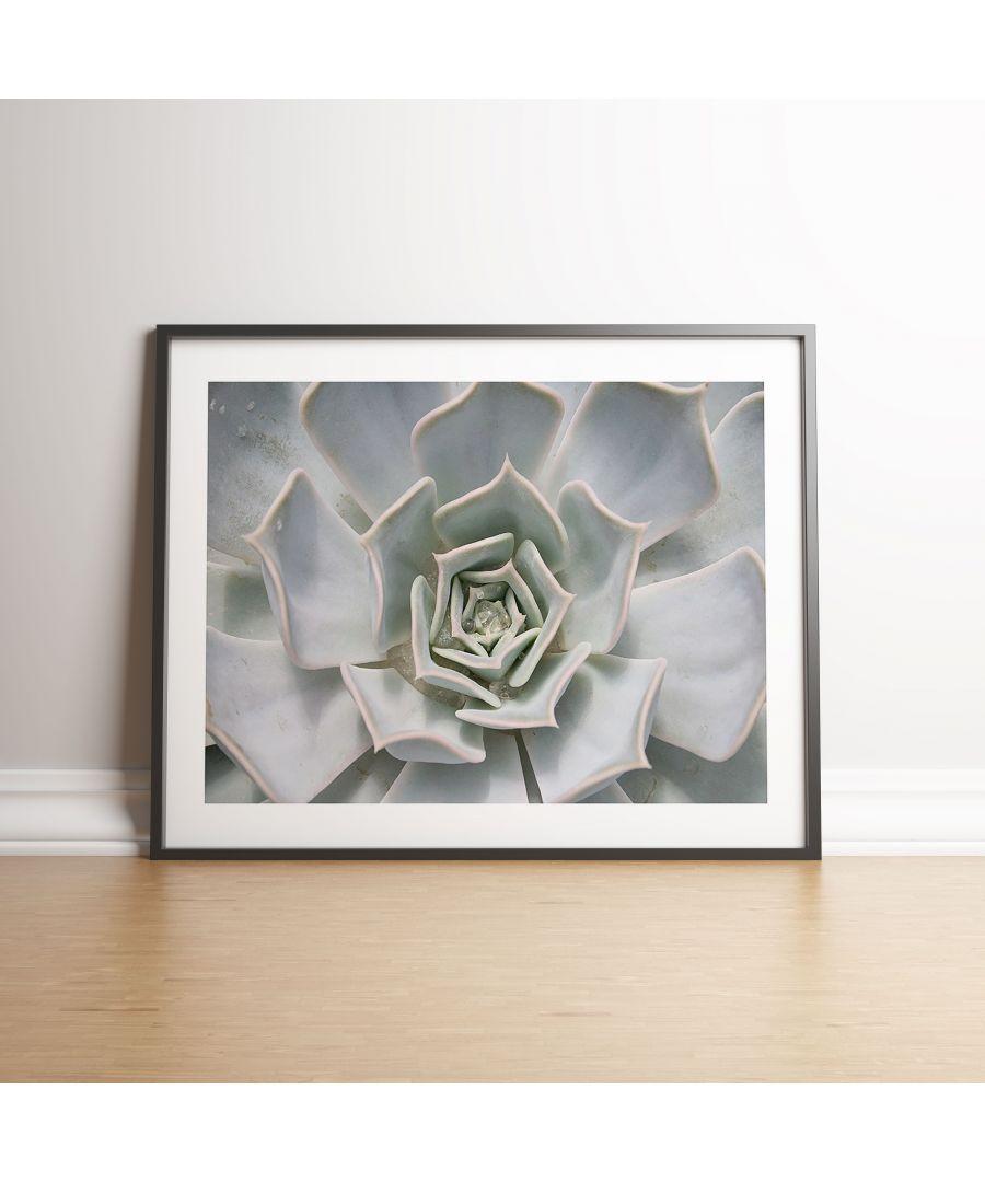 Image for White Succulent Plant - Black frame