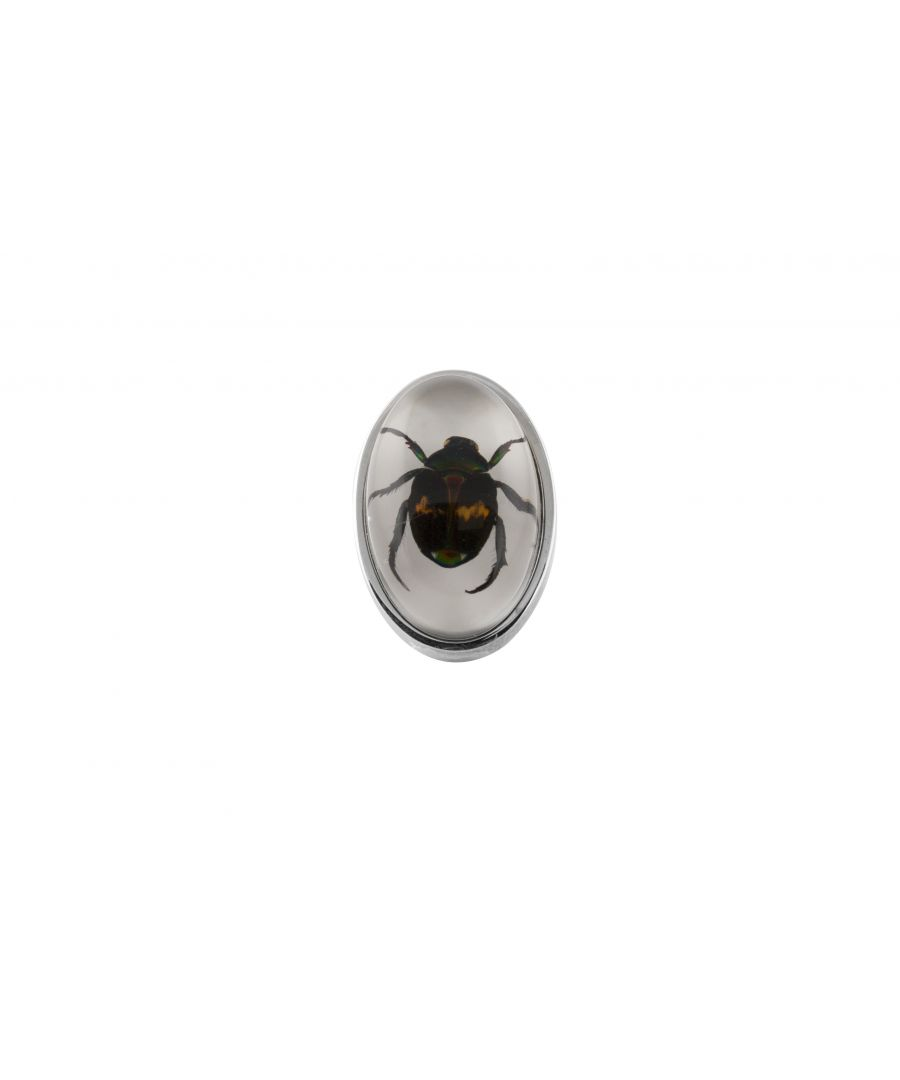 Image for Rhodium  Resin  Clear  Oval  Lucky Chafer Beatle  Deadly Creatures Pin