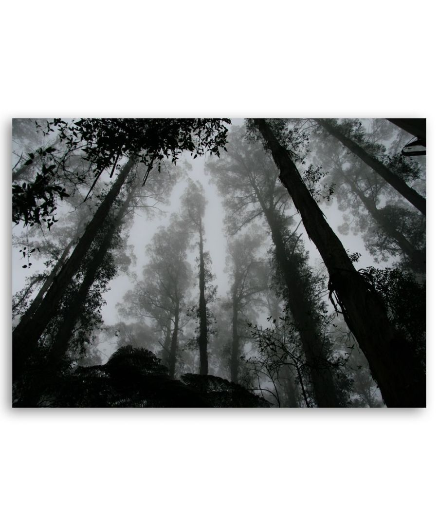 Image for Canvas Print - Fog In The Treetops - Wall Art Decor
