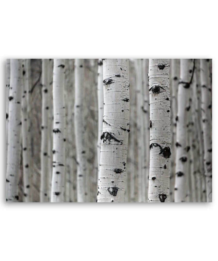 Image for Canvas Print - Birch Trunks - Wall Art Decor