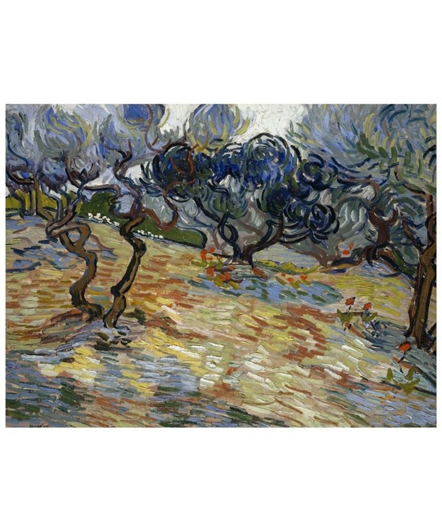 Image for Canvas Print - Olive Trees - Vincent Van Gogh Cm. 60x80